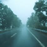 El Bosque en Ardichona 26-10-2013 018