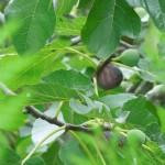 El Bosque en Ardichona 26-10-2013 035