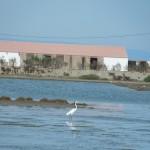 San Fulgencio ea 31-10 tot 03-11-2013 031