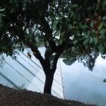 08-09-2014 Baraquinha-onderweg n PdAltar-PegodAltar 040