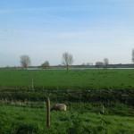 Ilse 08-04 en Maasbommel 13-04-2015 083