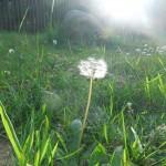 Makkum-Coesfelt 21-05-2015 035