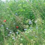 Vertrek 19-06, Ottersberg en Krassow op 20-06-2015 027
