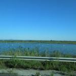 06-09-2015 Arles naar Le Boulou-flamingo's 014