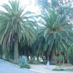 30-09-2015 CP Aguiar-onderweg Algarve+Mina do Lausal 013